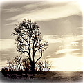 Lone Tree At Dusk by Ray Summers Photography