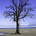 Lone Tree At Fort Gratiot Light House  by LeeAnn McLaneGoetz McLaneGoetzStudioLLCcom