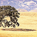 Lone Tree by Caitlyn  Grasso