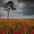 Lone Tree by Graeme Rowe