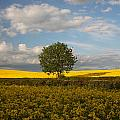Lone Tree by Graham Custance