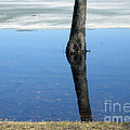 Lone Tree In Water by Andre Paquin