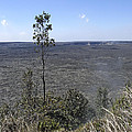 Lone Tree Kilauea Crater by Daniel Hagerman