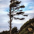 Lone Tree by Melanie Lankford Photography