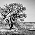 Lone Tree by Nicole Couture-Lord