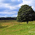 Lone Tree On Grassy Knoll by Kenny Glotfelty