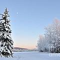 Lone Winter Spruce - Alaska by Gary Whitton