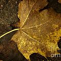Lonely Autumn Leaf by Jolanta Meskauskiene