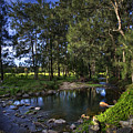 Lonely Creek by Darren Burton