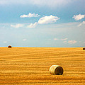 Lonely Fields by Todd Klassy