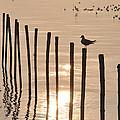 Lonely Gull by Pisit Santikulluk