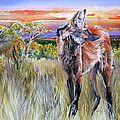 Lonely Lobo Sunset by Kitty Harvill