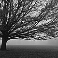 Lonely Low Tree