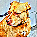 Lonely Pit Bull by Alice Gipson
