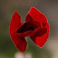Lonely Poppy by Radoslav Nedelchev