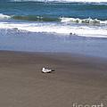 Lonely Sea Gull by Allan  Hughes