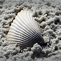 Lonely Shell by Debra Forand