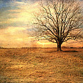 Lonely Tree At Sunset by Jai Johnson
