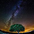 Lonely Tree by Cristi Munteanu