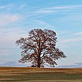 Lonely Tree by Cynthia Guinn