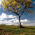 Lonely Tree In Mountain by IB Photography