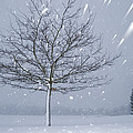 Lonely Tree In Snow Bavaria by Konrad Wothe