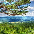 Lonesome Pine by Dan Stone