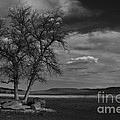 Lonesome Tree by Steve Triplett