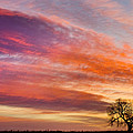 Lonesome Tree Sunrise by James BO Insogna