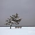Lonesome Winter by Karol Livote