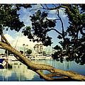 Long Beach Marina by Jack Pumphrey