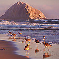 Long Billed Curlew - Morro Rock by Nikolyn McDonald
