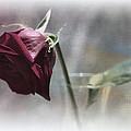 Red Rose Still Life by Linda Dunn