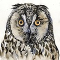 Long Eared Owl by Alfred Ng