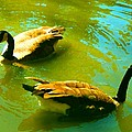 Long Neck Ducks by Amy Vangsgard