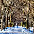 Long Path Ahead by Art Dingo