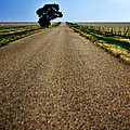 Long Road by Pam Romjue
