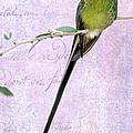 Long Tailed Hummingbird by Sabrina L Ryan