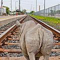 Rhino On A Railway Track by Les Palenik