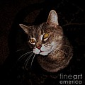 Long Whiskers by Theresa Davis