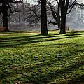 Long Winter Shadows by Joan Carroll