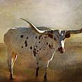 Longhorn  by Annette Coady