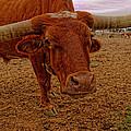 Longhorn Portrait by Jonathan Davison
