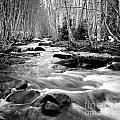 Longmire Stream 5bw by Earl Johnson