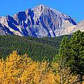 Longs Peak Autumn Aspen Landscape View by James BO  Insogna