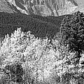 Longs Peak Autumn Scenic Bw View by James BO  Insogna