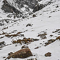 Longs Peak -  Vertical by Aaron Spong