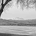 Longs Peak Winter View In Black And White by James BO Insogna