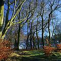 Longshaw Woods by Darren Galpin