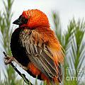 Lonley Bird by Ben Yassa